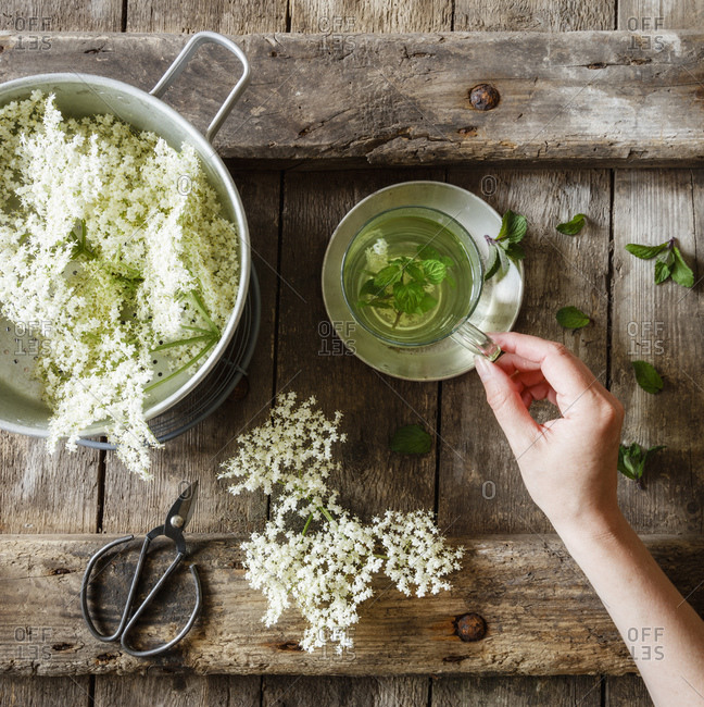 Hand of woman picking up cup of elderflower tea with mint