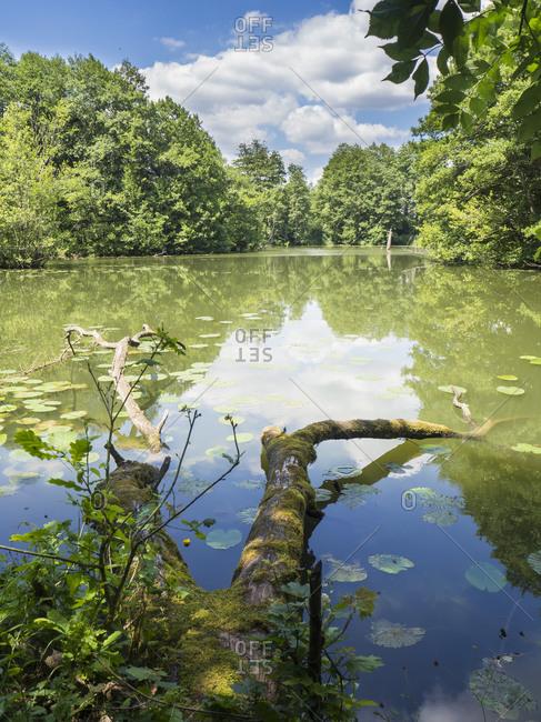 Driftwood lying on green riverbank