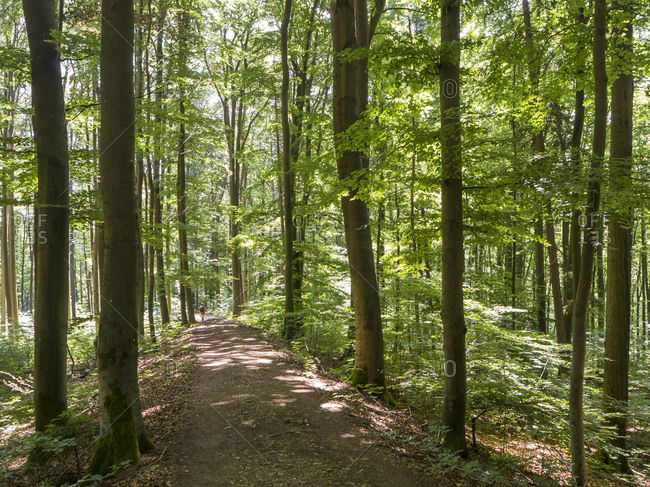 Footpath in green springtime forest