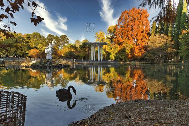 December 5, 2020: Russia- Krasnodar Krai- Sochi- Silhouette of swan swimming in Dendrarium park pond during autumn