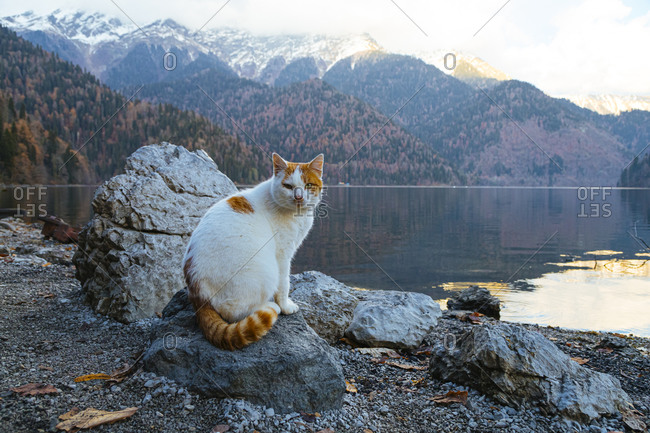 Portrait of cat sitting on top of lakeshore rock