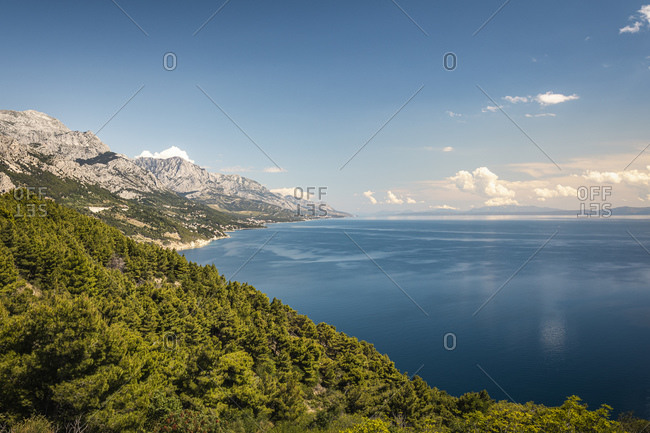 Sea coast with forest in foreground