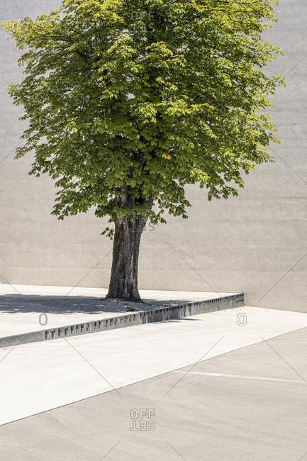 Slovenia- Ljubljana- Monument to the Victims of All Wars (Spomenik rtvam vseh vojn)- Tree on town square