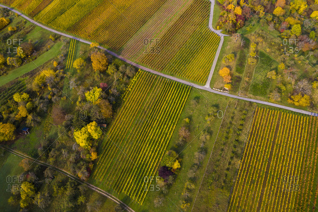 Aerial view of autumn vineyards- Baden-Wurttemberg- Germany