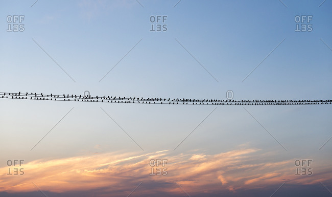Birds on a wire somewhere near Sandwich in Kent
