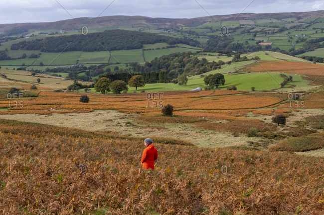 A woman standing among autumn colors of red and brown bracken while walking The Begwyns route near Hay-on-Wye