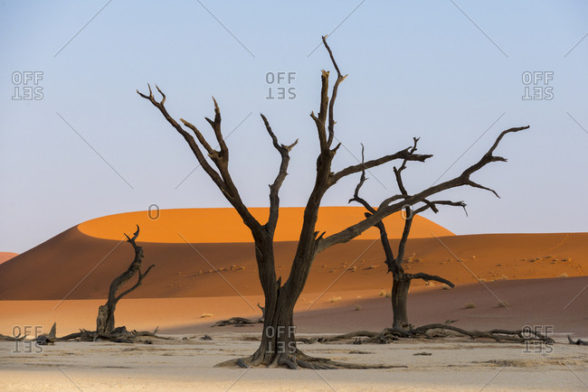 Dead Acacia trees silhouetted against sand dunes at Deadvlei in Namibia