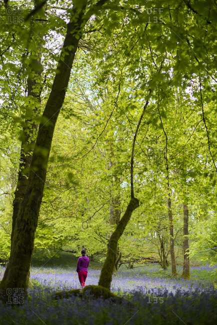 A woman explores a forest floor covered in Bluebells in the Lake District