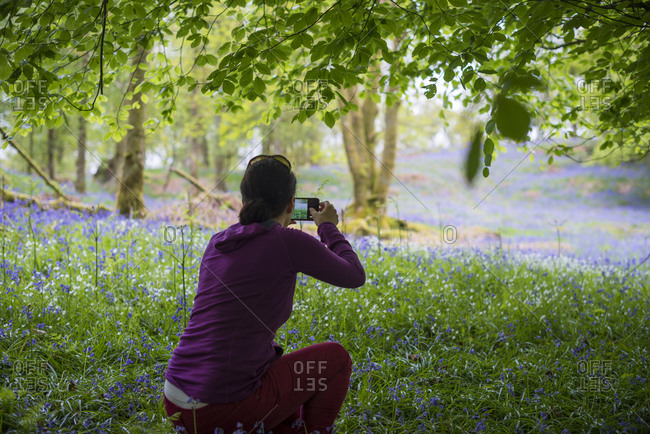 A woman takes a photo of a forest floor covered in Bluebells in the Lake District