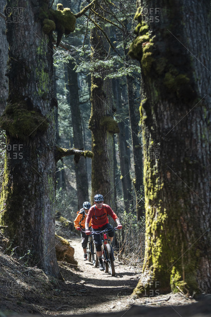 Mountain bikers cycle through tall pine trees in a forest near the little village of Sing Gompa in the Gosainkund region in the Himalayas