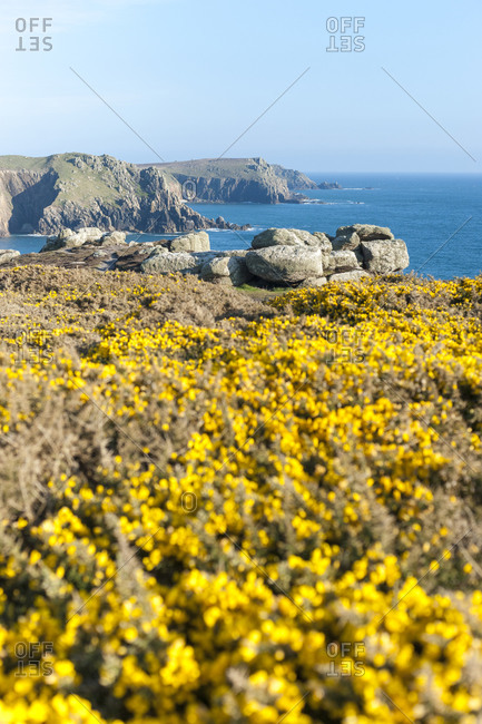 Gorse covered cliffs along Cornish coastline near Land's End at the westernmost part of the British Isles