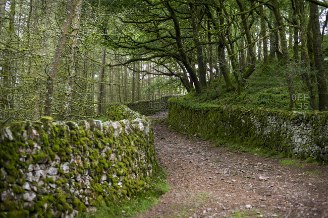A rough stone road and drystone Lakeland walls surrounded by forest and overhanging trees in Eskdale in the English Lake District