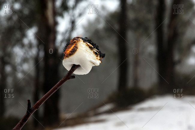 Charred marshmallow on a stick being prepared over winter campfire