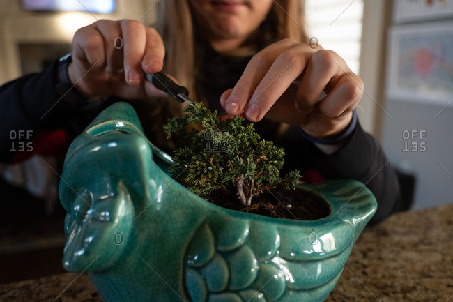 Young boy trimming a bonsai tree in a blue owl planter