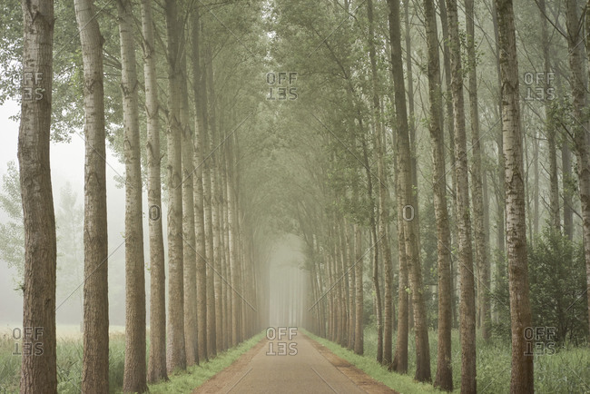 Treelined road in the countryside covered in fog