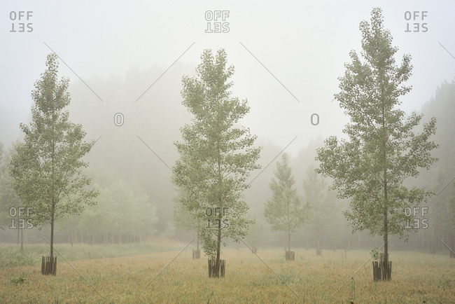 Trees growing in the countryside surrounded by fog