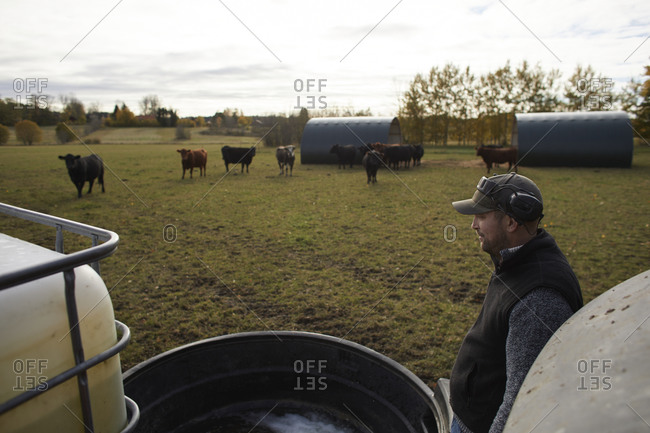 Farmer pouring water for cattle