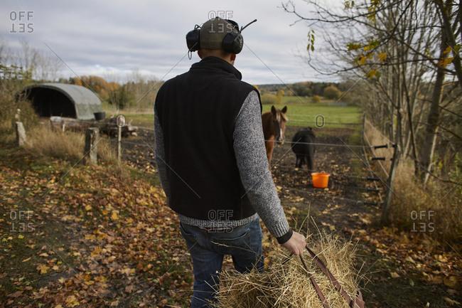 Farmer carrying straw for feeding animals
