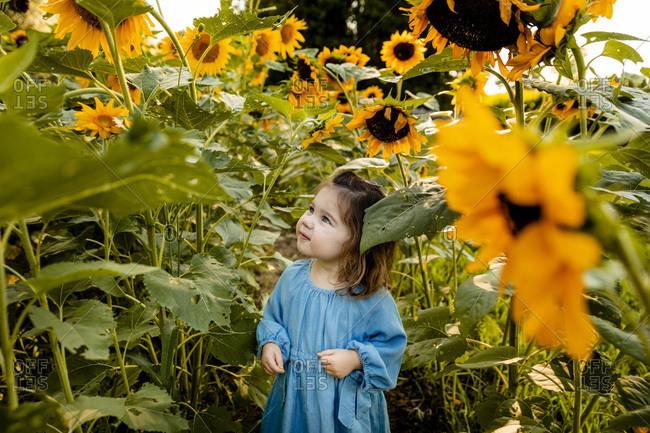 Little girl standing alone in sunflower field