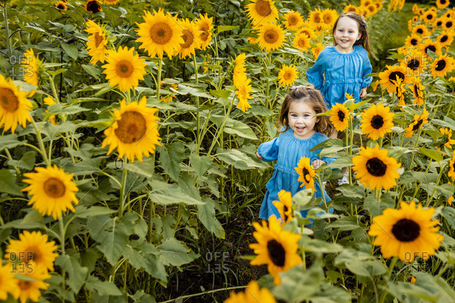 Two little sisters running together in sunflower field