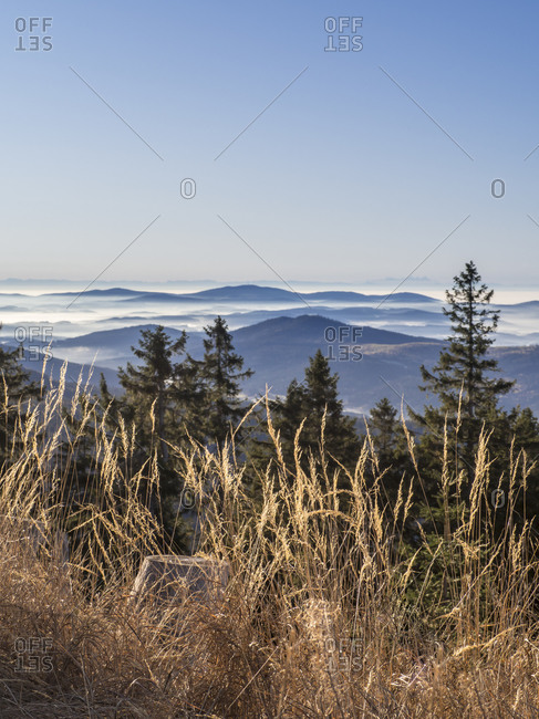 Reeds with foggy peaks of Bavarian Forest at dawn