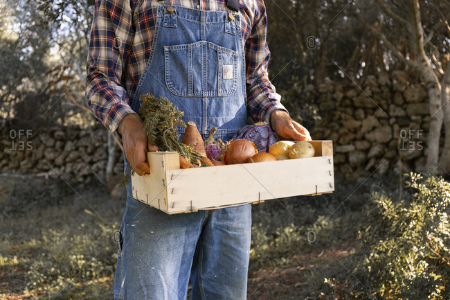 Young man holding vegetable crate at farm