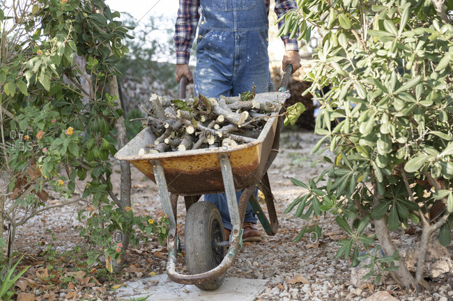 Young man pushing wheelbarrow filled with firewood