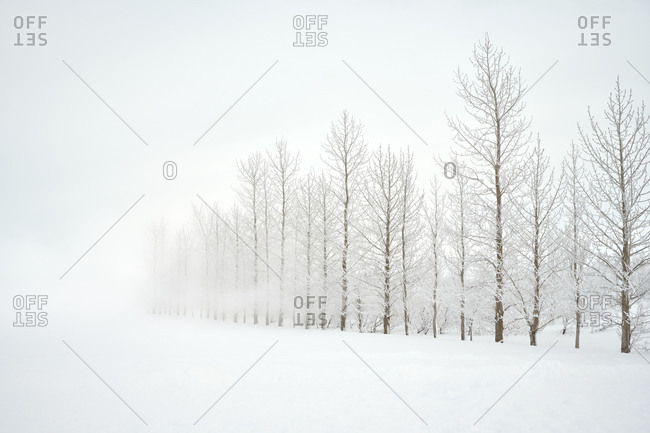 Forest trees on snowy day