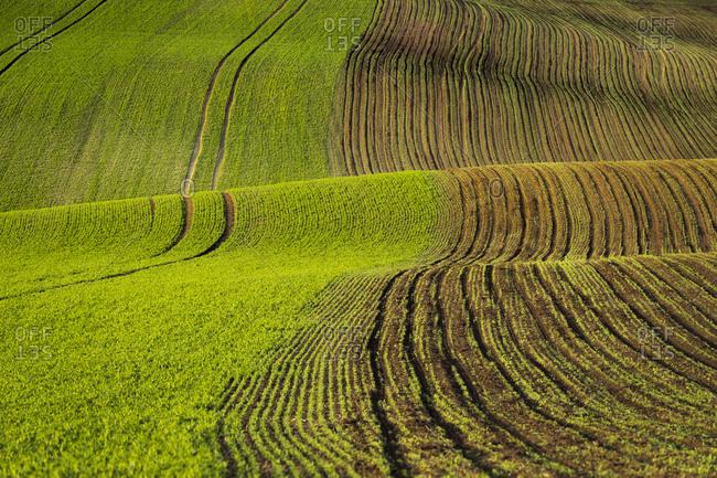 Idyllic view of rolling field near Kyjov, Hodonin District, South Moravian Region, Moravia, Czech Republic