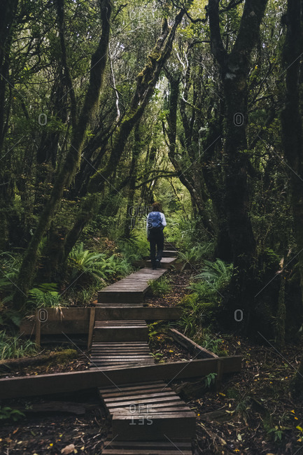 Young woman walking up a wooden trail in the rainforest to Mount Taranaki, New Zealand