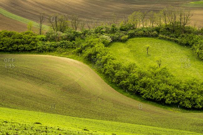 Idyllic view of trees amongst rolling fields near Kyjov, Hodonin District, South Moravian Region, Moravia, Czech Republic