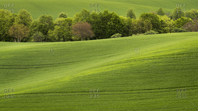 Scenic view of trees amongst rolling fields near Kyjov, Hodonin District, South Moravian Region, Moravia, Czech Republic