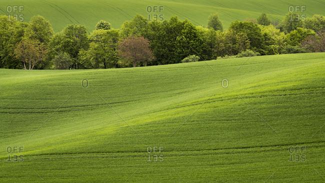 Scenic view of trees amongst rolling fields near Kyjov, Hodonin District, South Moravian Region, Moravia, Czech Republic