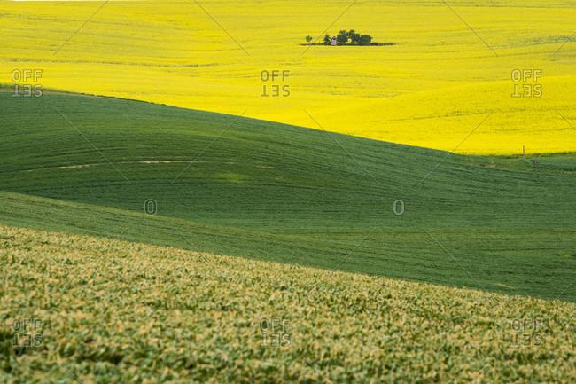 Idyllic view of barn amongst rolling fields near Kyjov, Hodonin District, South Moravian Region, Moravia, Czech Republic