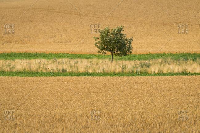 Idyllic view of solitary tree in field near Kyjov, Hodonin District, South Moravian Region, Moravia, Czech Republic