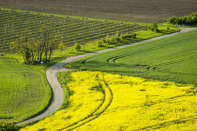 Idyllic view of winding road amongst agricultural fields near Kyjov, Hodonin District, South Moravian Region, Moravia, Czech Republic
