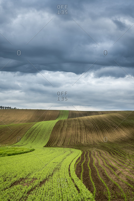 Idyllic view of rolling fields near Kyjov with dramatic cloudy sky, Hodonin District, South Moravian Region, Moravia, Czech Republic