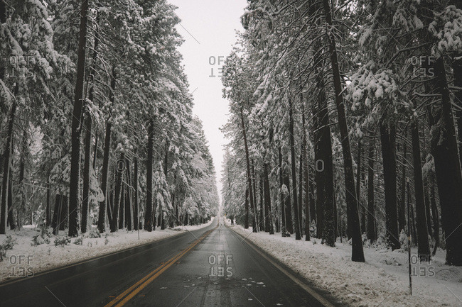 Empty road cuts through snow covered forest