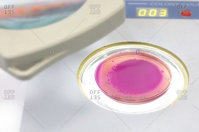 quality control of eggs in a chemical laboratory