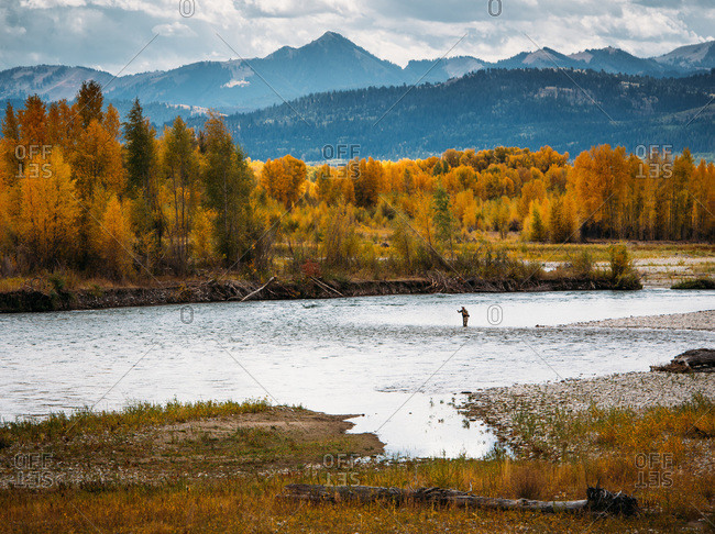 A fly fisherman casts in the snake river during fall in Wyoming