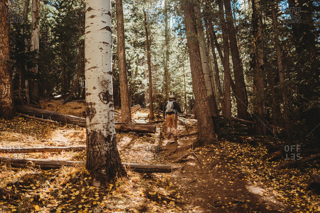 Hiking into the forest of trees