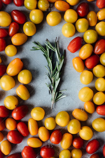 Cherry tomatoes and rosemary sprig on gray wooden backdrop