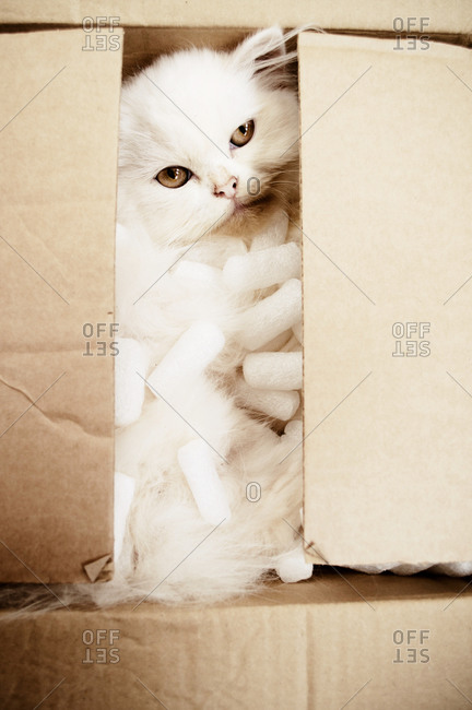 Adorable kitten inside a cardboard box full of packing peanuts