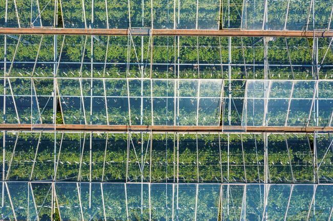 Aerial view of an enormous tomatoes farm and plantation in Burstwick, United Kingdom.
