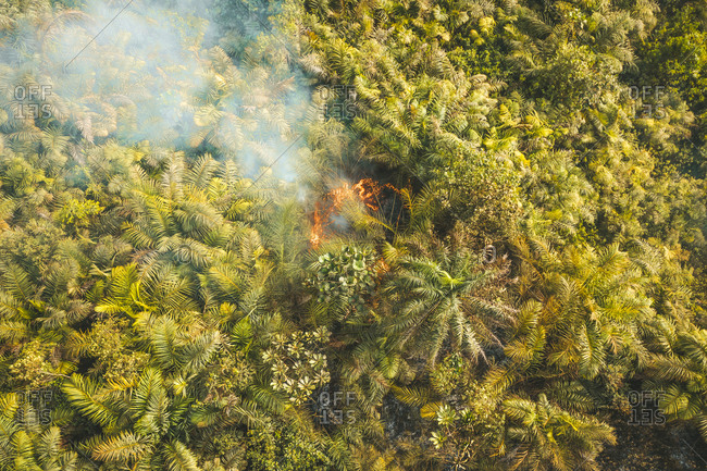 Aerial view of forest with fire and smoke in Western Area rural, Sierra Leone.