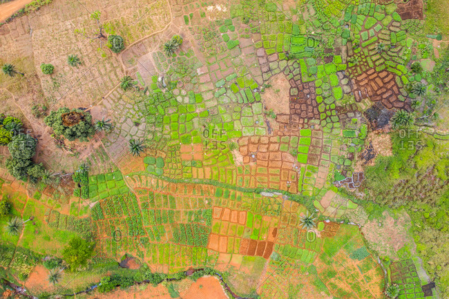 Aerial view of geometric shapes plantation in a forest in Western Area, Sierra Leone.