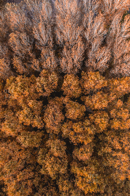 Aerial view of trees with autumn colors near Flaca city, Catalonia, Spain.