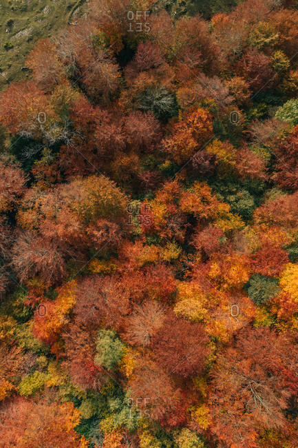 Aerial view of trees during a colorful autumn season near Camprodon, Catalonia, Spain.