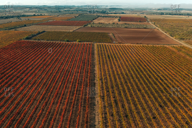 Aerial view of a truck driving a straight road across the vineyards fields near Verdù township in Lleida state, Spain.