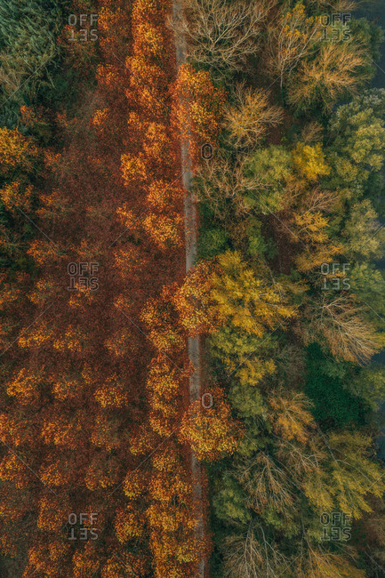 Aerial view of a straight forest road with beautiful Autumn colors near the town of Besalù, Girona, Spain.